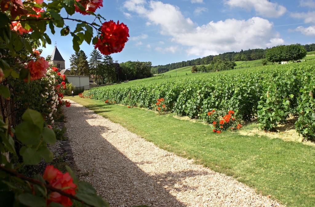 Vignes et fleurs